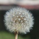 Flower by lozonline