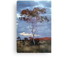 Sunset Batton Hill,North Simpson Desert Metal Print