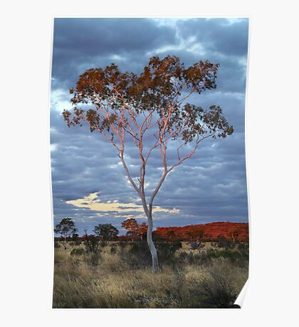 Sunset Batton Hill,North Simpson Desert Poster