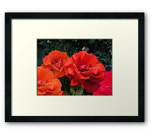 Composition With Roses – February 9, 2010 Framed Print