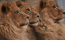 Brothers by Franco De Luca Calce