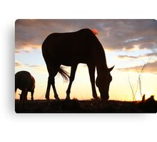 Rumaging for food in drought. Canvas Print