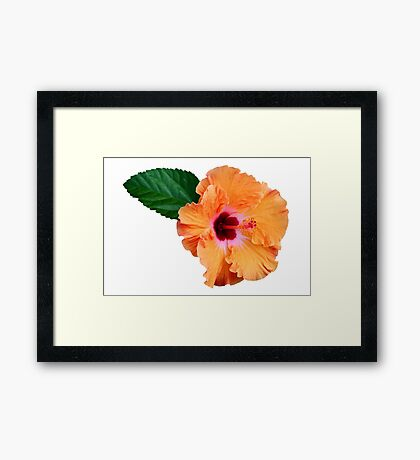 Coloured ibiscus flower Framed Print