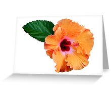 Coloured ibiscus flower Greeting Card