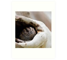 Australian Owlet-Nightjar Art Print