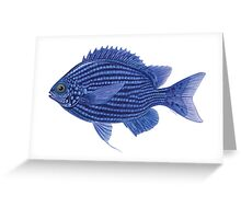 Deep Blue Chromis Greeting Card