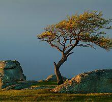 Dog Rocks, Batesford Victoria by Joe Mortelliti