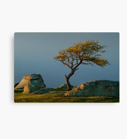 Dog Rocks, Batesford Victoria Canvas Print