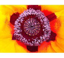 Macro Poppy Photograph Photographic Print