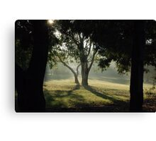 Foggy Morning - Through the Tree Canvas Print