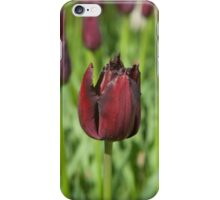 "Tulipa ""Vincent van Gogh"" iPhone Case/Skin"