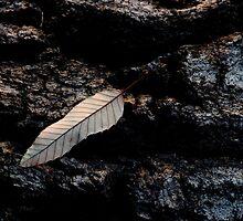 Fallen by Janos Sison