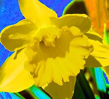 Daffodil Abstract by AnitaFaye
