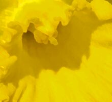 Daffodil Abstract Sticker