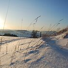 snow grass by james  lovatt