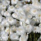 Arctic Cotton by LouiseLafleur