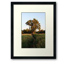 Creek Tree Framed Print