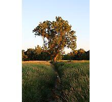 Creek Tree Photographic Print