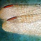 Wings by Susan Werby