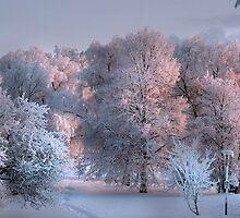 About 20 degrees below zero by Markku Mestilä