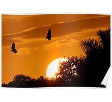 Everglades Sunset Poster