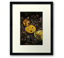 Dried Cactus Framed Print