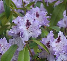 Purple Rhodies 2 by art2plunder