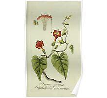 Plantarum Indigenarum et Exoticarum - Lukas Hochenleitter und Kompagnie 1788 - 064 Poster