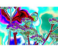 Butterfly on verbena Photographic Print