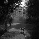 Molly along the misty path by lettie1957