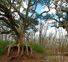 Oaks on the Bayou by Bonnie T.  Barry