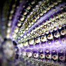 Sea Urchin by NEmens