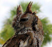 Owl by JohnYo