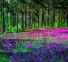 Meadow In Pink And Violet by Susan Nixon