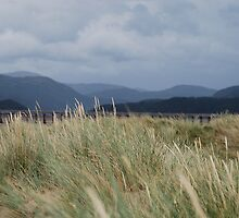 cardigan grass,barmouth wales by james  lovatt
