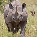 Black Rhino With Oxpecker by Aldi221