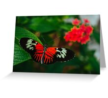 The Red Butterfly Greeting Card