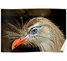 Portrait of the Blue Eyed Red-legged Seriema Bird Poster