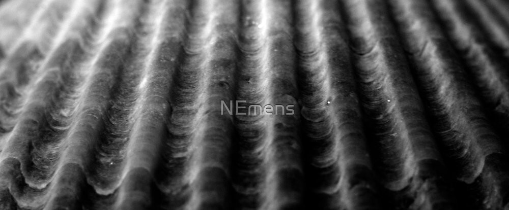 ridges - answered by tizzit in 1 guess - a seashell by NEmens