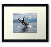 Barnacle Boy Framed Print