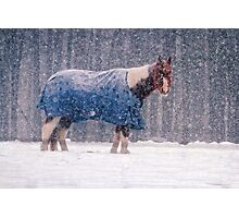 Equine Snowstorm Two Photographic Print