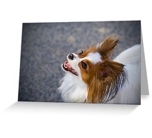 Bright Eyed & Bushy Tailed Greeting Card