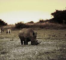 Rhino with Zebra by Robyn Liebenberg