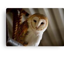 Wild Barn Owl Watching From its Perch Inside a Rustic Barn Building Canvas Print