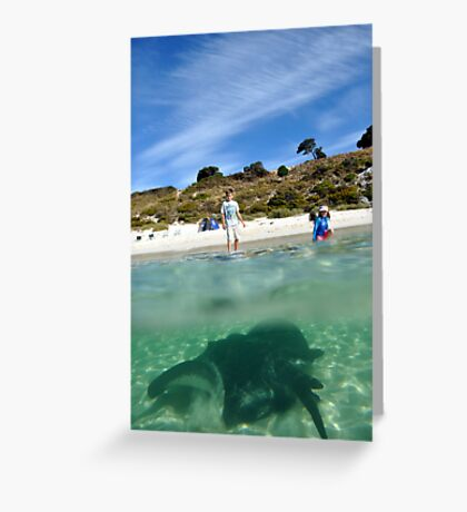 Stingray, Rottnest, Western Australia. Greeting Card