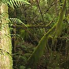 Mossy Trees in the Rainforest by Michael John