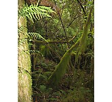 Mossy Trees in the Rainforest Photographic Print