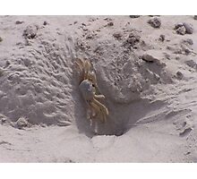 Ghost Crab On Ocracoke Island Photographic Print