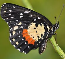 Pretty Butterfly  by Judy Grant