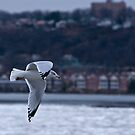 Zooming Down the Hudson by Dave Bledsoe